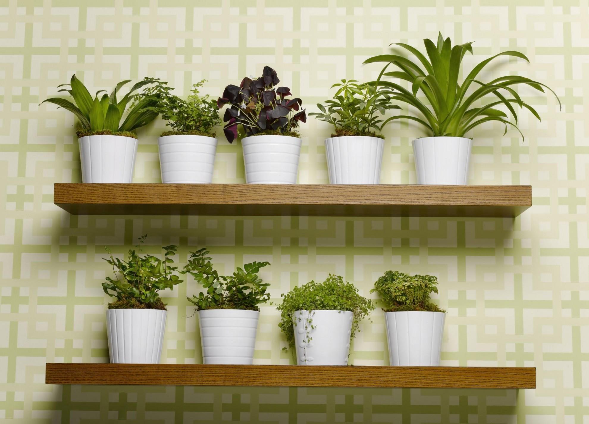 Immagini Piante E Fiori piante e fiori artificiali   geminiani s.r.l.